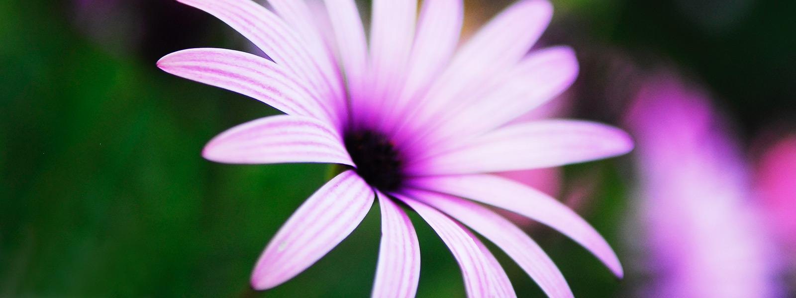 cinque-terre-flower-web